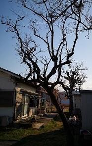 植木の引っ越し(中平) - 柚の森の仲間たち