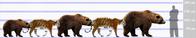 アムールトラとクマの関係(最も詳細な論文) - アニマル情報202X