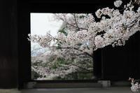 知恩院の桜 - Taro's Photo