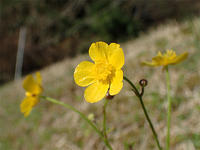 早春の大江高山① - 清治の花便り
