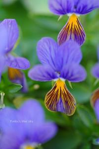 3月の庭Chipo* - FUNKY'S BLUE SKY
