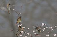 ゆく鳥 くる鳥 - 心のままに