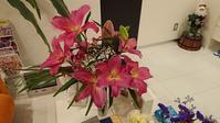 咲き誇った「カサブランカ」~卒業式から12日~ - 安次富ゼミのブログ!!