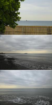 2020/03/31(TUE) 静かな海辺には新芽が.......。 - SURF RESEARCH