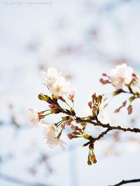 4分咲き - M2_pictlog