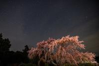 夜桜2選 - toshi の ならはまほろば