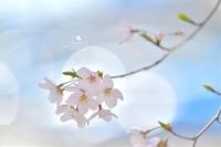 四月ばか - お花びより