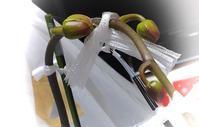 胡蝶蘭のその後 - 緑と手仕事 ワンダーライフ