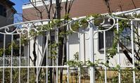 Garden Story(ガーデンストーリー)さんにて「実録!バラがメインの庭づくり第3話」がアップ頂きました。 - バラとハーブのある暮らし Salon de Roses