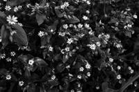 2020春#21 - Yoshi-A の写真の楽しみ