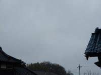 ♬ホ~ホケキョ - 庭を眺めて…コーヒータイム