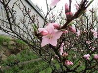 花木 - 季節の写真