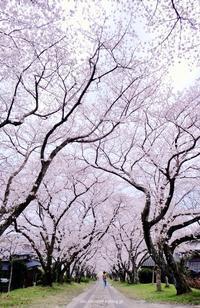 円応寺 - A  B  C