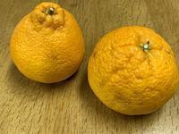 """☆""""しらぬい""""美味しい柑橘☆ - ガジャのねーさんの  空をみあげて☆ Hazle cucu ☆"""