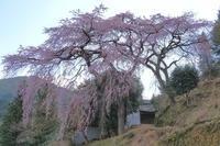 桜 4奈良県 - ty4834 四季の写真Ⅱ