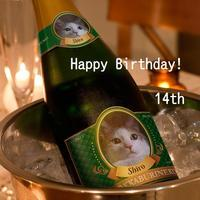 シロ14歳おめでとう - ねこっかぶりねこ3