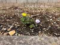 今年の一番庭 - 今日のとぱーずむーん