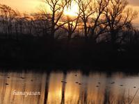 快晴の朝 - こもれびの森