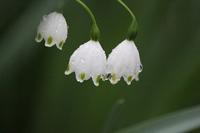 4月1日 - 絵と庭