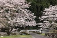 乗本の桜 - ecocoro日和