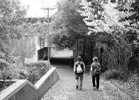 最近躊躇しているリハビリ散歩 - 照片画廊
