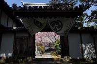 2020桜巡り@西迎寺 - デジタルな鍛冶屋の写真歩記