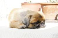 コロナ自粛ですよ、ここはな - 犬カフェここはな  奈良町OFFICIAL