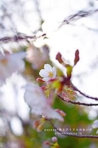Flower Photograph #19 - psyuxe*旅とアトリエのあいだ