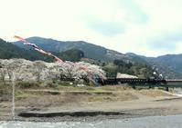 大井川鐵道桜ヘッドマーク - きょうはなに撮ろう