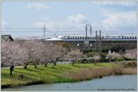 桜新幹線と在来線が行ったり来たり - 野鳥の素顔 <野鳥と日々の出来事>