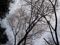 桜が地域と私をつないでいる - 大屋地爵士のJAZZYな生活