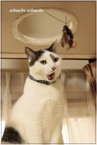 歌う猫 - 今が一番