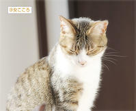 猫の意地 - ちいさなチカラ