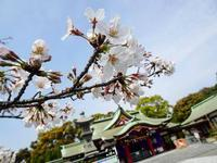 篠崎八幡神社 - NATURALLY