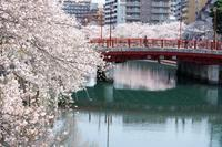 大岡川の桜@2020 - 想い出
