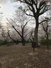 懐かしの桜山へ - あの日、あの時、あの場所で