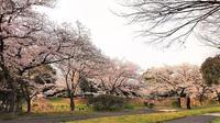 桜が満開 ♪ - 自由空間の間取り