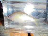 What is this fish? - Longhill Net Blog