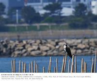 2020.4.4(2) - 鳥撮り遊び