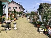 茂ってきました♡と、さよならレウィシア( ´∀`) - 薪割りマコのバラの庭