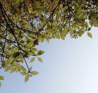 いそがしい春… - 侘助つれづれ