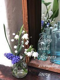 マスク接客ご容赦ください -  Flower and cafe 花空間 ivory (アイボリー)