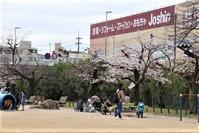 藤田八束の桜前線ご紹介、夙川公園の桜はもう今が満開・・・子供たちの学校が再開されることを祈っています、学校で走り回る姿が一番です。コロナなんかに負けないぞ!! - 藤田八束の日記