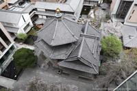 京都のへそ・・・頂法寺六角堂 - はんなり京都暮らし