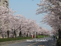 足立区の街散歩 457 - 一場の写真 / 足立区リフォーム館・頑張る会社ブログ