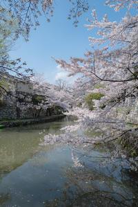 桜*さくら*SAKURA - 気ままにお散歩