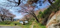 4月4日の桜巡り/長沼城址@福島県須賀川市 - 963-7837
