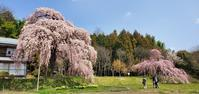 4月4日の桜巡り/横田陣屋の御殿桜@福島県須賀川市 - 963-7837