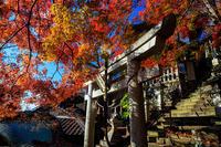 紅葉が彩る滋賀2019断崖の紅葉神社(太郎坊宮/阿賀神社) - 花景色-K.W.C. PhotoBlog