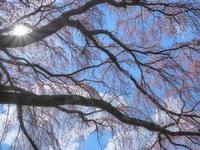 桜 8奈良県 - ty4834 四季の写真Ⅱ